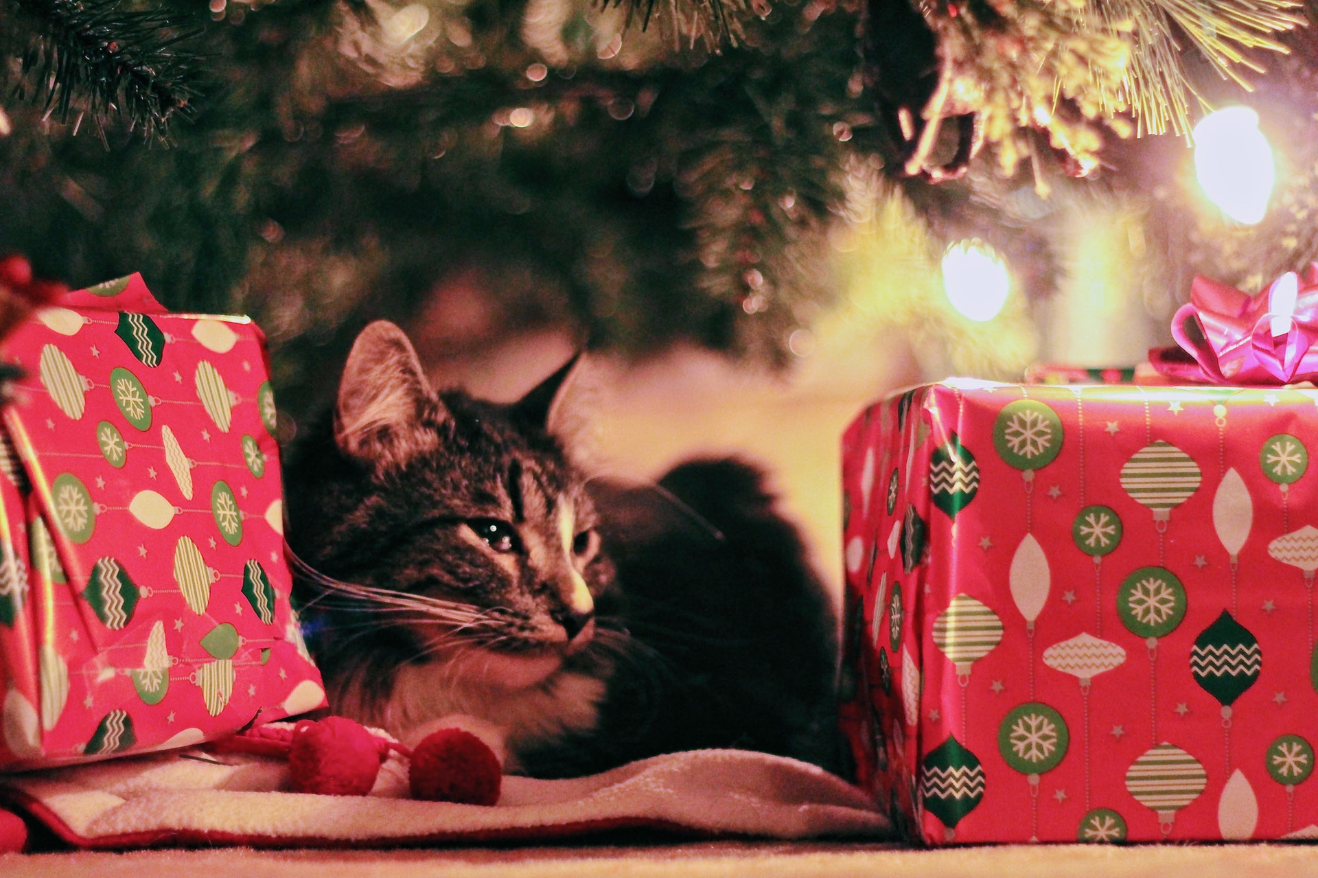 Christmas Gifts for Cat Lovers | Unique Holiday Gift Ideas for Pets ...